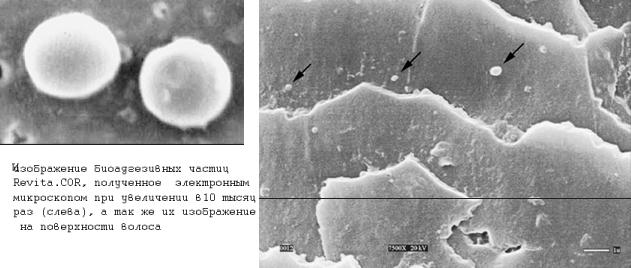 Биоагдезивные частицы REVITA.COR
